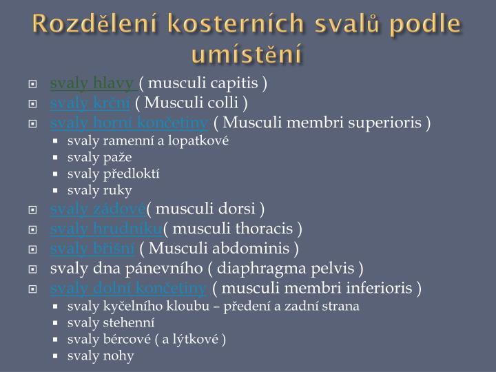 Rozdělení kosterních svalů podle umístění