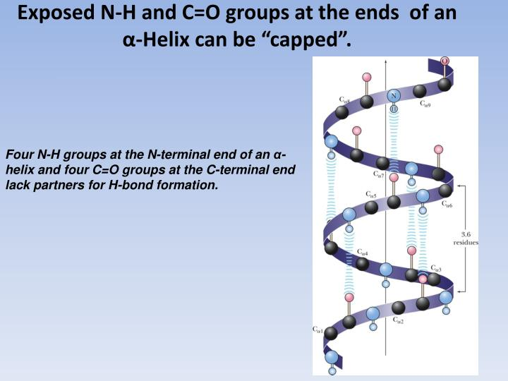 Exposed N-H and C=O groups at the ends  of an