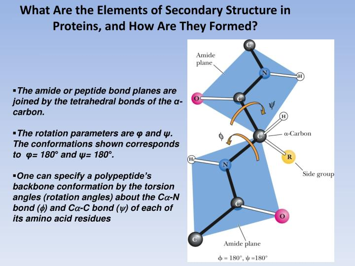 What Are the Elements of Secondary Structure in Proteins, and How Are They Formed?