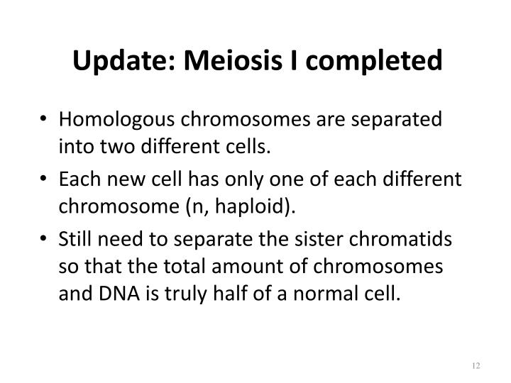 Update: Meiosis I completed