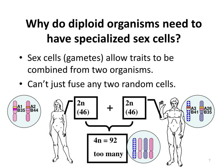 Why do diploid organisms need to have specialized sex cells?