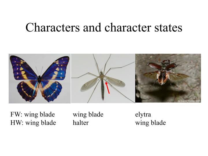 Characters and character states