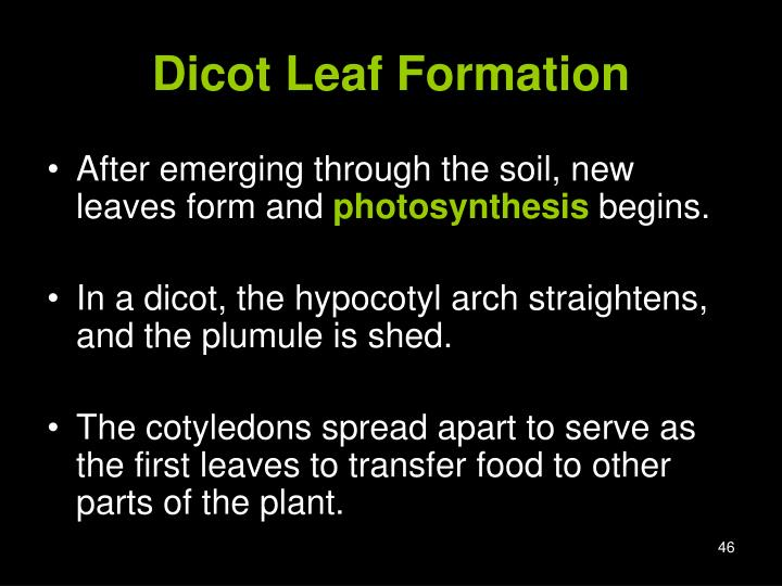 Dicot Leaf Formation