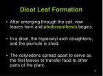 dicot leaf formation