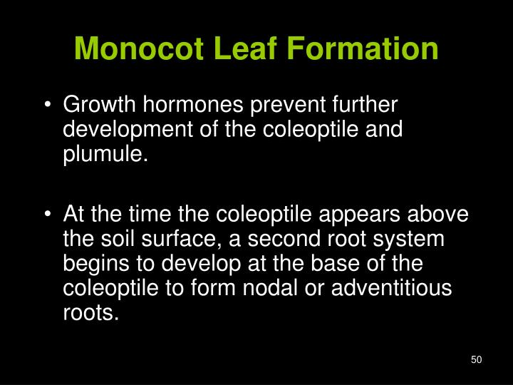 Monocot Leaf Formation