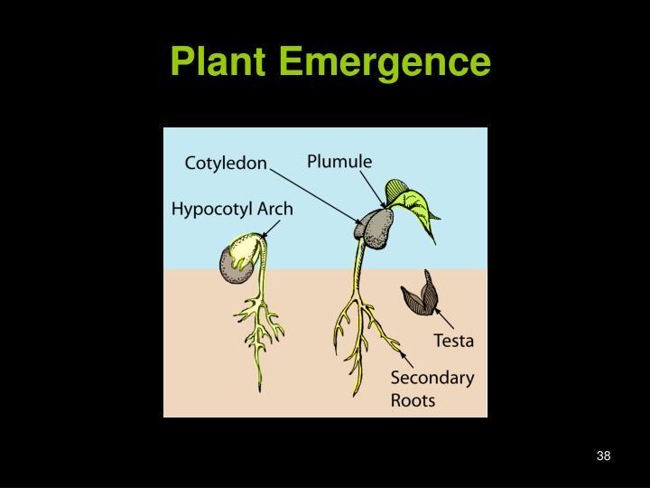 Plant Emergence
