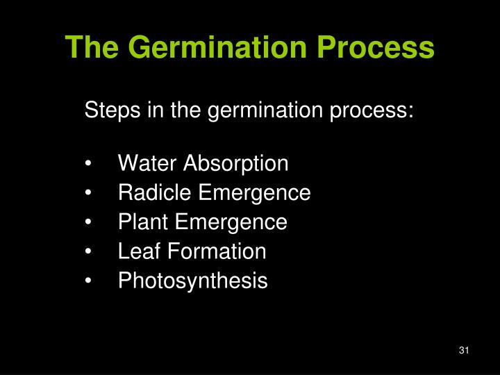The Germination Process