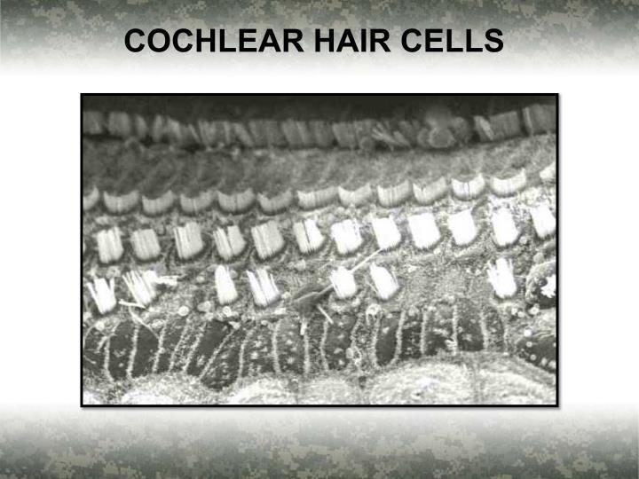 COCHLEAR HAIR CELLS
