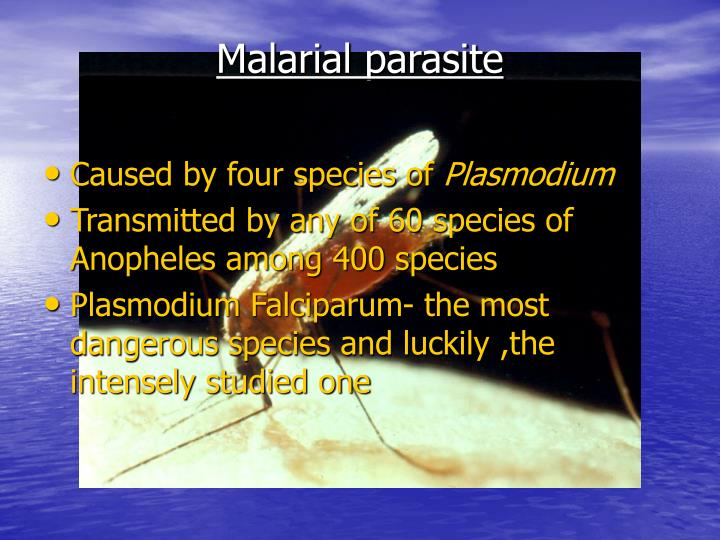 Malarial parasite
