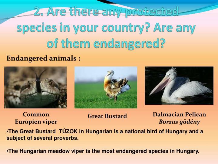 Endangered animals :
