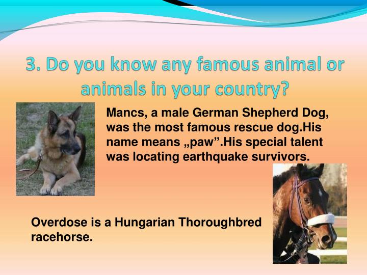 "Mancs, a male German Shepherd Dog, was the most famous rescue dog.His name means ""paw"".His special talent was locating earthquake survivors."