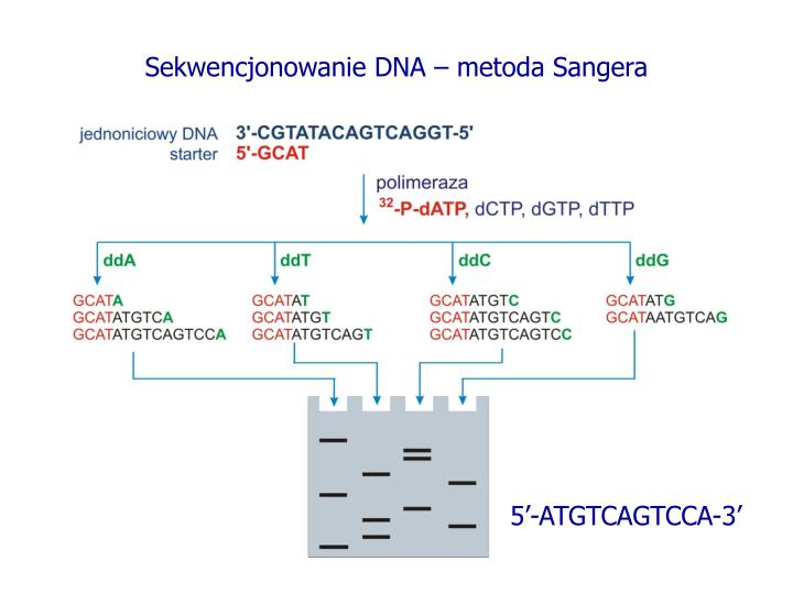Sekwencjonowanie DNA – metoda Sangera