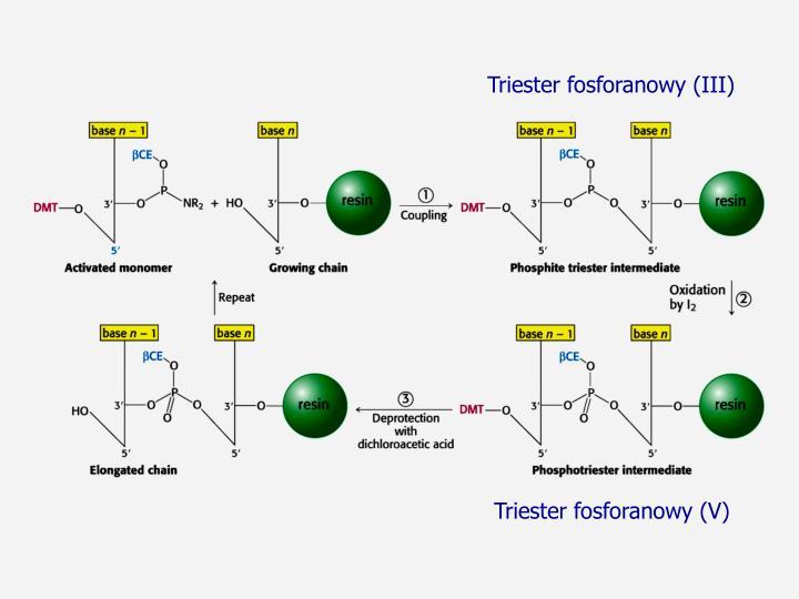 Triester fosforanowy (III)