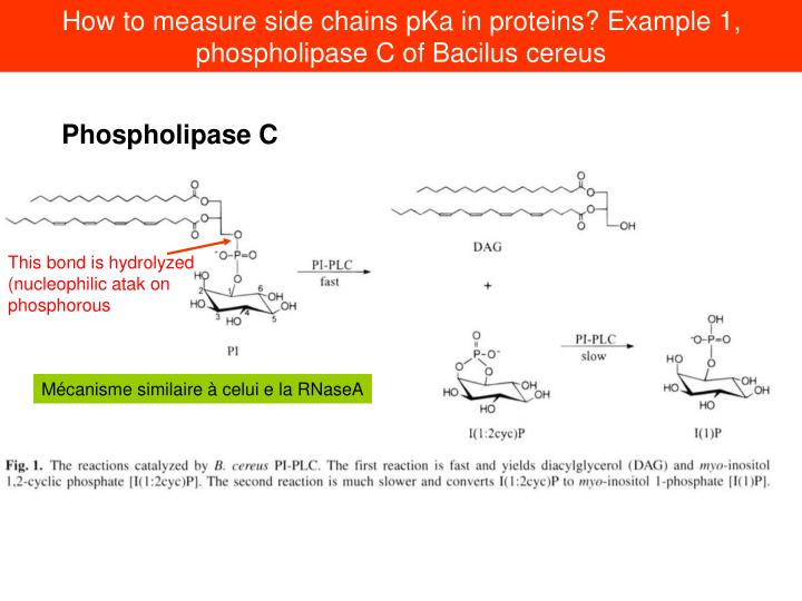 How to measure side chains pKa in proteins? Example 1, phospholipase C of Bacilus cereus