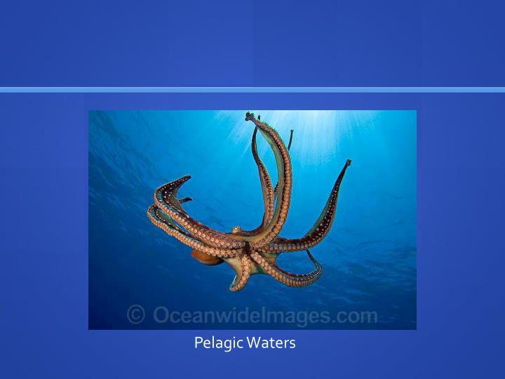 Pelagic Waters