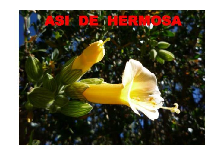 ASI  DE  HERMOSA