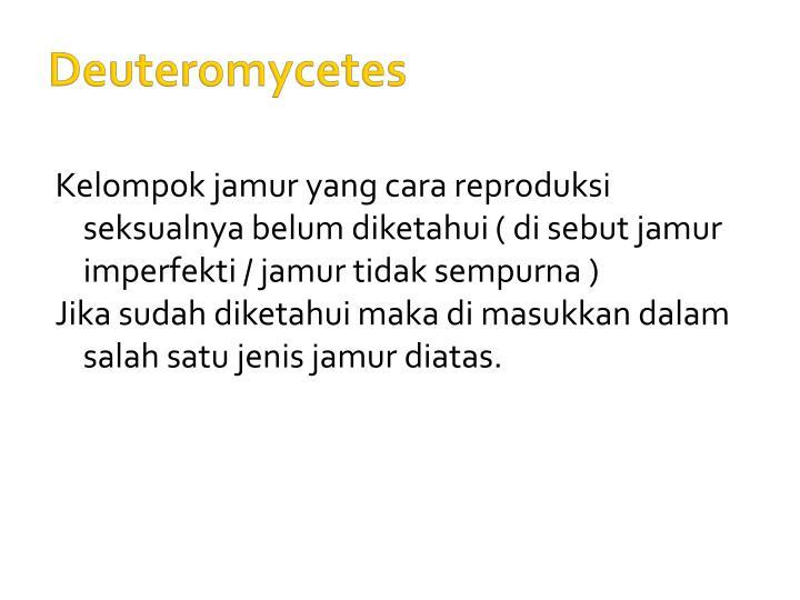 Deuteromycetes