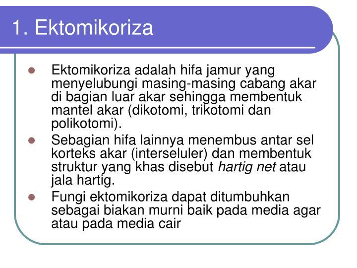 1. Ektomikoriza