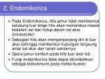 2 endomikoriza