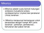 mikoriza1