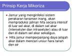 prinsip kerja mikoriza