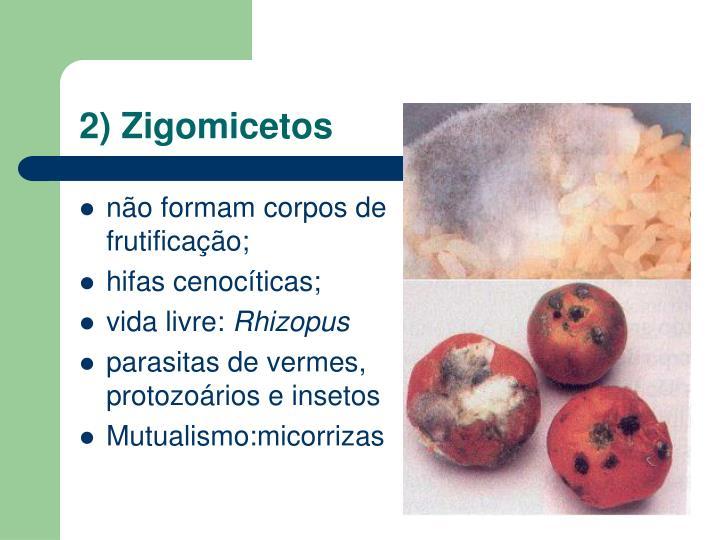 2) Zigomicetos