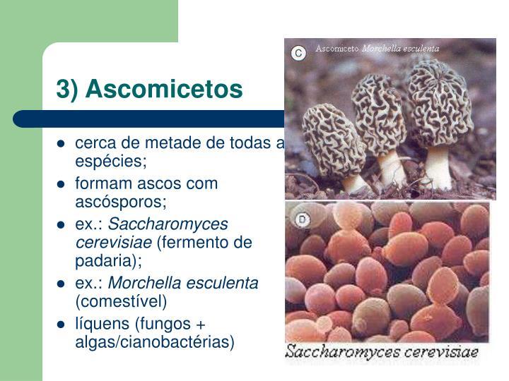 3) Ascomicetos