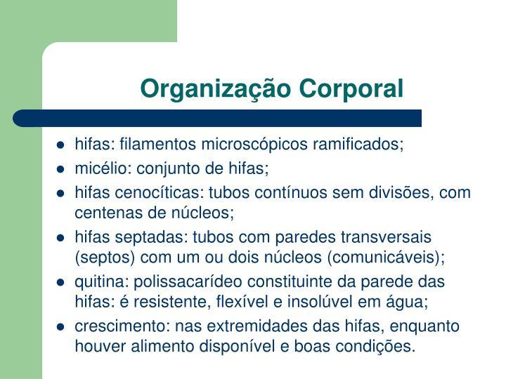 Organização Corporal
