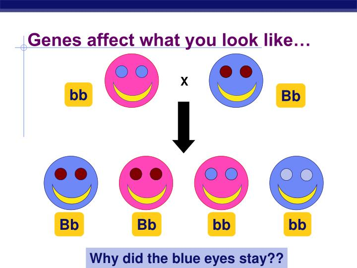 Genes affect what you look like…
