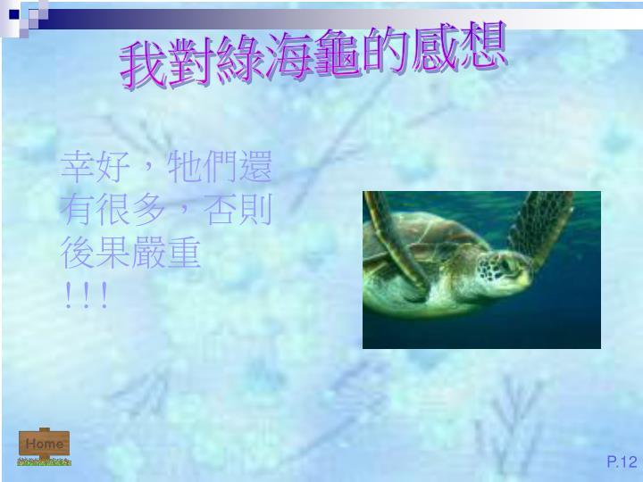 我對綠海龜的感想
