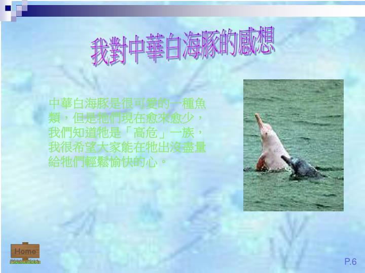 我對中華白海豚的感想