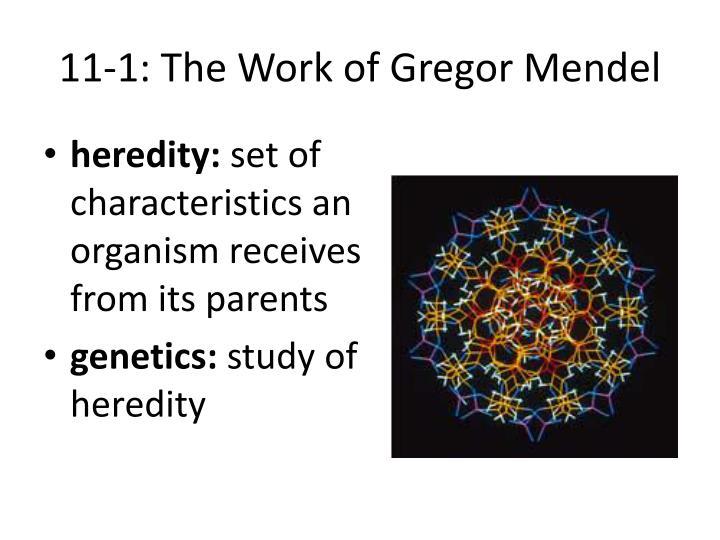 11-1: The Work of Gregor Mendel