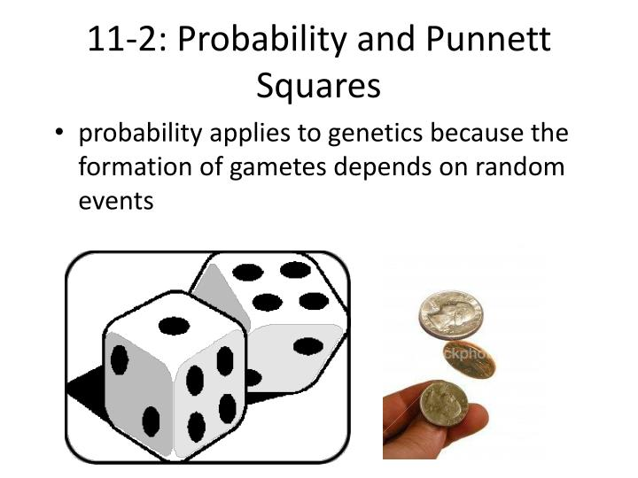 11-2: Probability and Punnett Squares