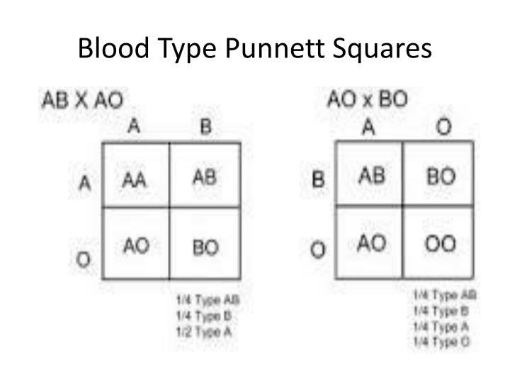 Blood Type Punnett Squares
