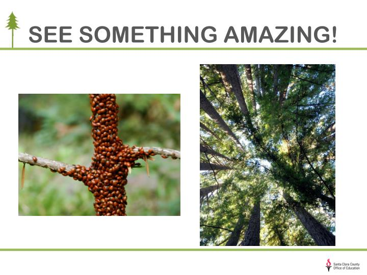 SEE SOMETHING AMAZING!