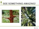 see something amazing