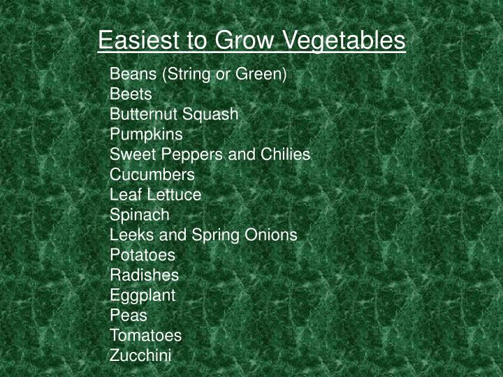 Easiest to Grow Vegetables