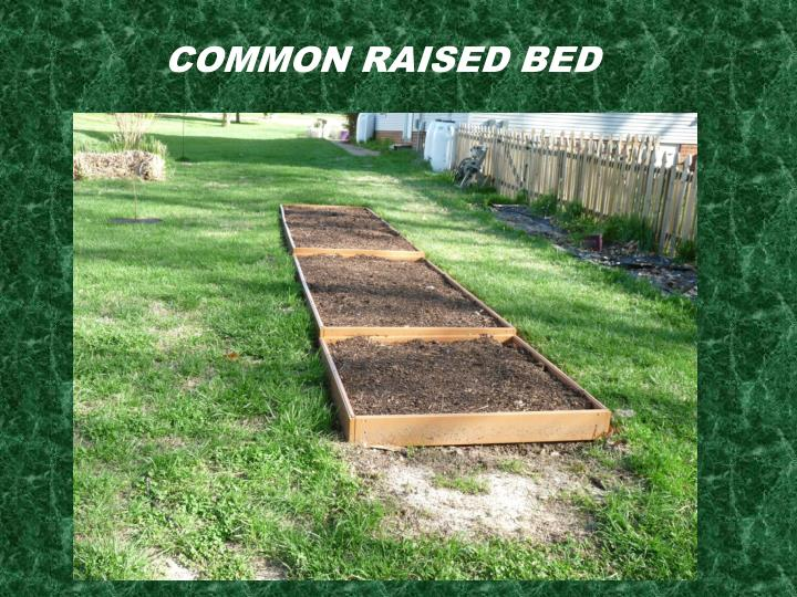 Common Raised Bed