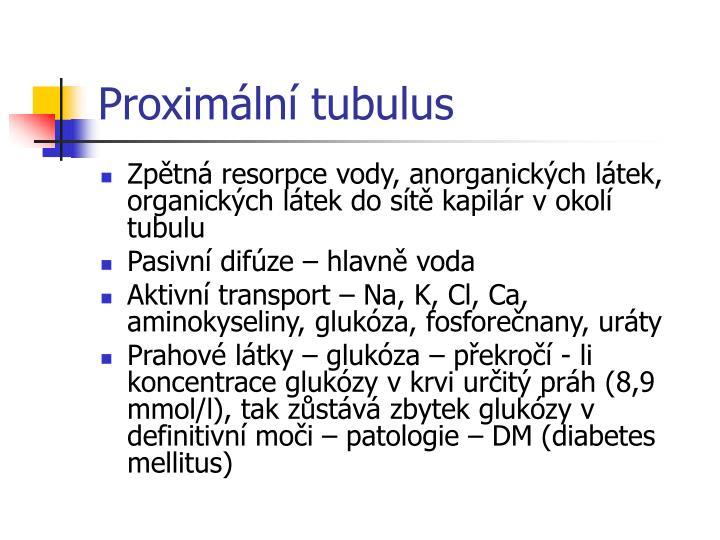 Proximální tubulus