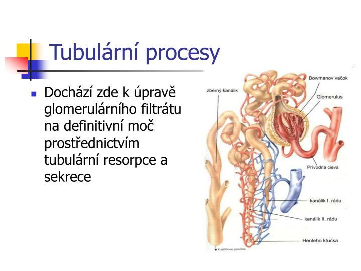 Tubulární procesy