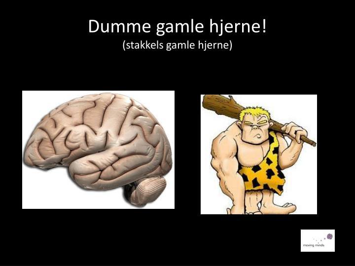 Dumme gamle hjerne!