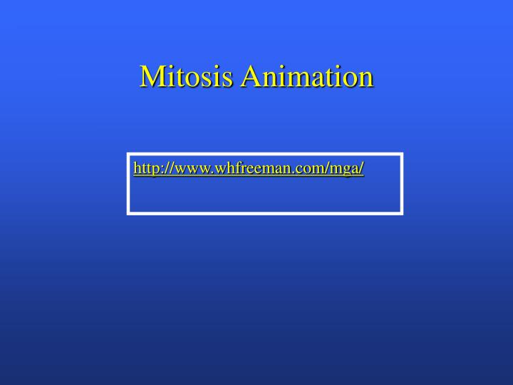 Mitosis Animation