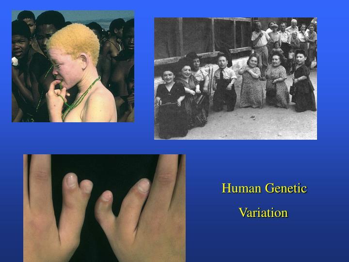 Human Genetic
