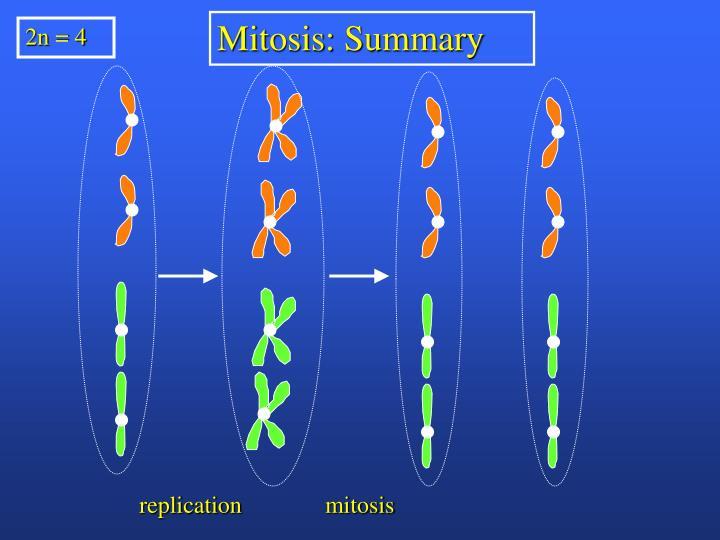 Mitosis: