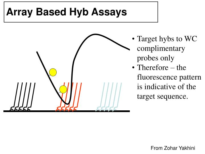 Array Based Hyb Assays