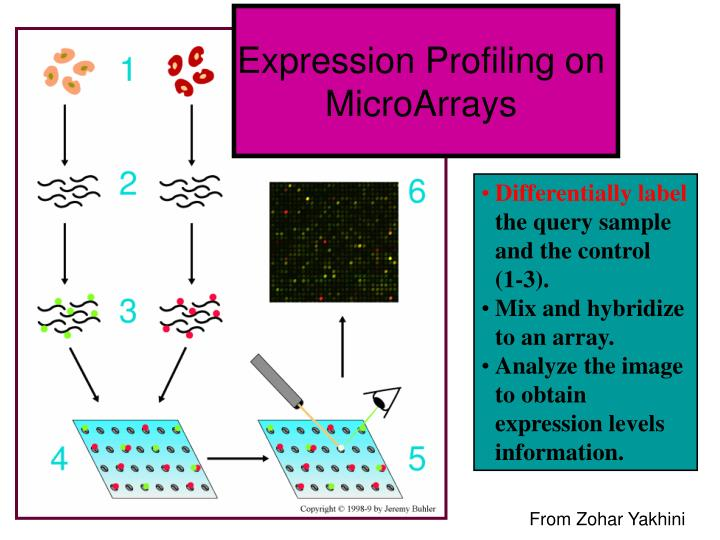 Expression Profiling on MicroArrays
