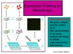 expression profiling on microarrays1