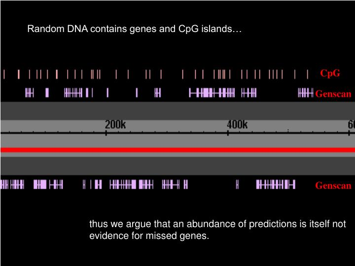 Random DNA contains genes and CpG islands…