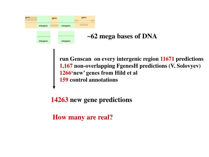 ~62 mega bases of DNA