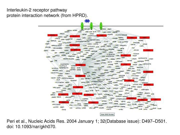 Interleukin-2 receptor pathway